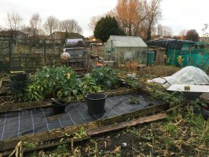 Weed Suppressant - York Allotments